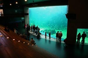 Nordeuropas største akvarium ligger i Hirtshals, og vi anbefaler absolutt et besøk!